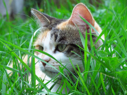 Coping with Grief When Your Cat Dies