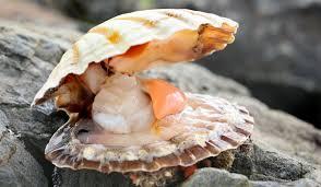 Infected shellfish