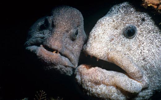 Mystery the Deep