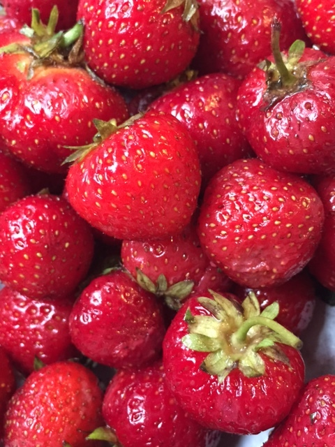 Fresh picked strawberries from Plow Creek Farm