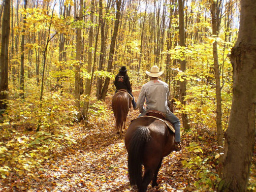 Horseback riding on trails enjoying the scenery.