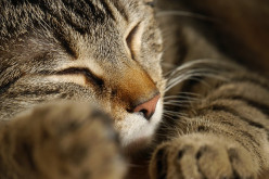 Which is best; a good long nap of the day or a catnap of just a few minutes?