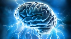 5 Myths About the Human Brain