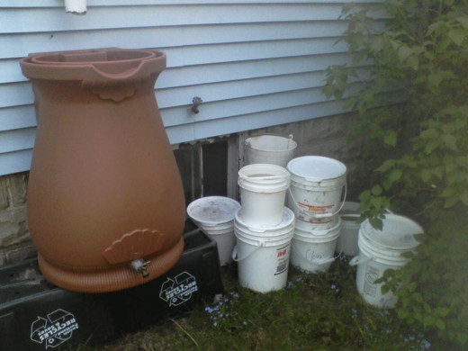 After a rain, I used 5-gallon buckets with lids to store the water for a day or two while I used it to water tomatoes and sweet potatoes.