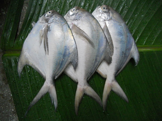 Fish (Pomfret)