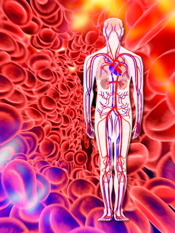 Computer Artwork Of Human Circulatory System And Red Blood Cells