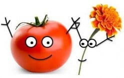 Organic Gardening Tips and Tricks