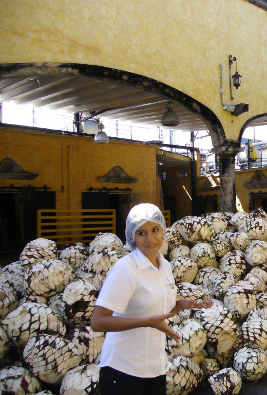 A distillery worker stands in front of a large pile of piñas destined for the ovens that are visible in the backround.