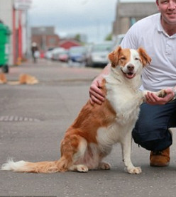 Meet Paddy, The amazing dog that hopped on a trampoline, jumped a fence, and found his owner on a train going to work!