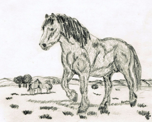 Pencil drawing of a horse.