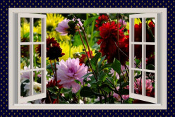 Do you think flowers near windows can allow pollen into your house?