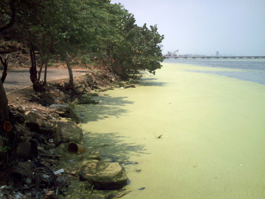 Lagoons gather pollution too, often gathering runoff from nearby agricultural lands.
