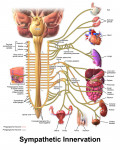 MCQs - Main Structures of the Nervous System