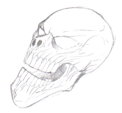 Just darken your pencil lines a bit to add shadow to the mouth and under the eyes of the skull.