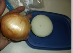 Food and Cooking: The Onion