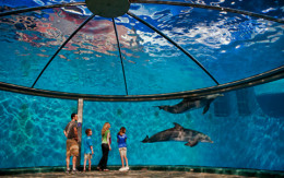 Dolphin Adventure Show, Indianapolis Zoo