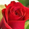 Frishta Noory profile image