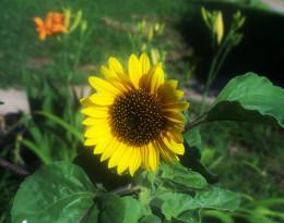 A joyous day...sunny flower of a day...
