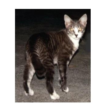 Misty, my tabby cat.