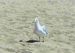 Calm waters, white sands and the occasional sea gull added to the peace so desired by those who came to Mystie.