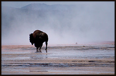 The Old Bull turns. ( All photos thanks to Flickr)