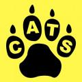 Cat Litter Box Etiquette