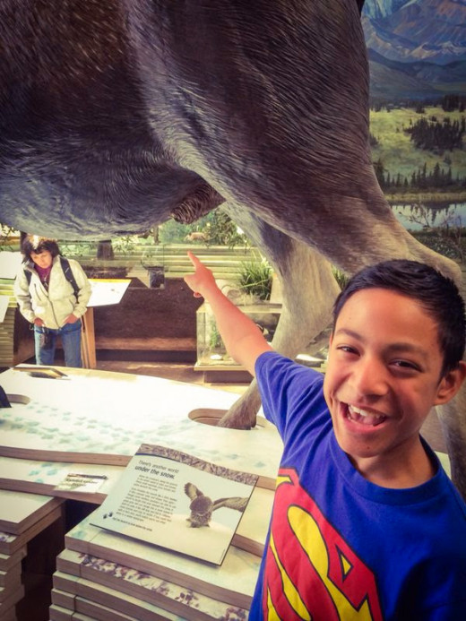 The wildlife exhibits at the Denali National Park visitors center museum can be a source of amusement to young children.