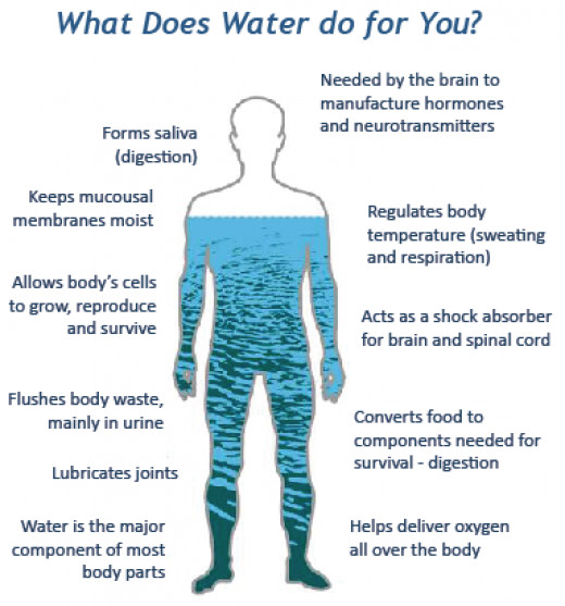 What water Is used for in your body.