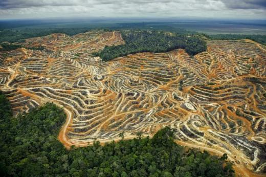 Deforestation for palm oil