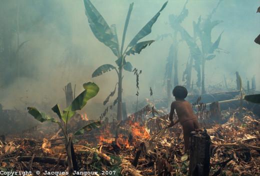 Slash and burn sugar agriculture in Venezuela