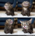How Lil Bub Inspires Us All