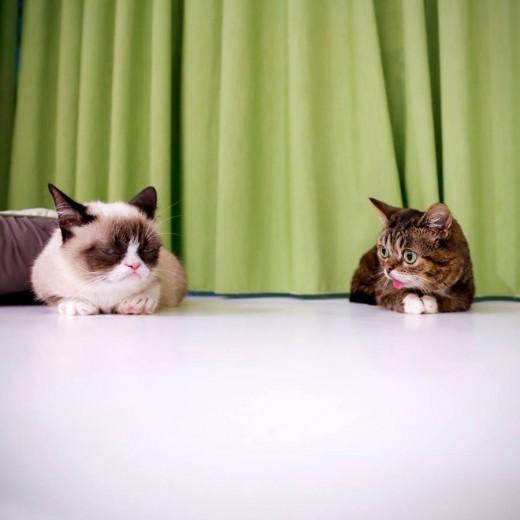 Bub with Grumpy Cat
