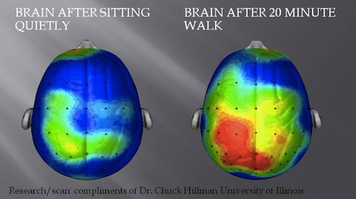 Exercise makes your brain function better.