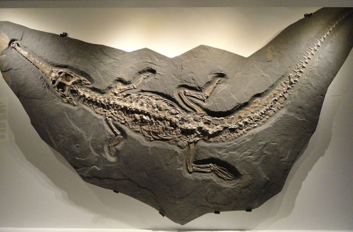 """Exhibit in the Houston Museum of Natural Science, Houston, Texas. This is why we call Oil & Gas """"fossil fuels."""""""