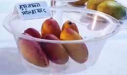Mango variety Husneaara