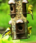 How to Build a Backyard Bird Sanctuary