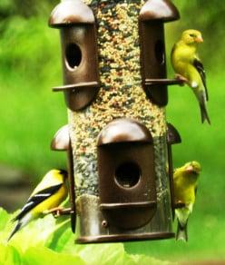 How to Build a Backyard Bird Sanctuary