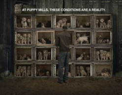 Animal Rights: Puppy Mills