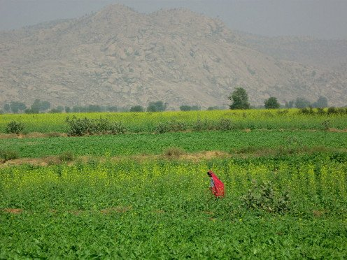 Agriculture is the primary occupation of Indians