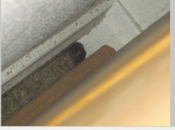 Pets and Animals - Rodents - Mice - Aren't They Cute? (In Someone Else's House)
