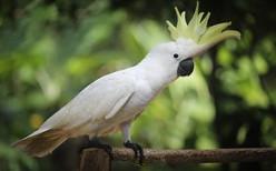 Cockatoo - Dancing, Laughing,Talking, Feeding, Fighting :Interesting Videos