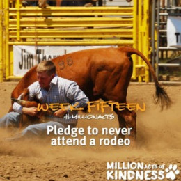 the pledge to never attend rodeos is part of  BC SPCA's 2015 Million Acts of Kindness campaign