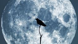 The Secret World of Crows
