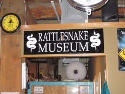 Visit The American International Rattlesnake Museum