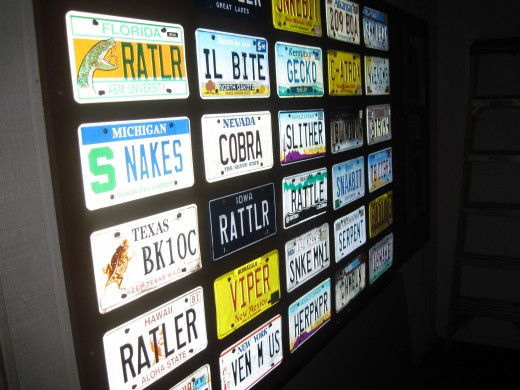 Collection of License Plates That Feature Snakes