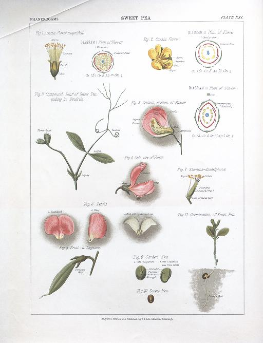 The Botanical Atlas 1883.
