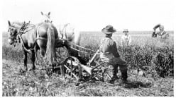 A homesteader talks with his neighbor during harvest time.