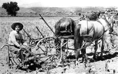 Notice how the invention of farming machinery made the farmer's work easier and more efficient.