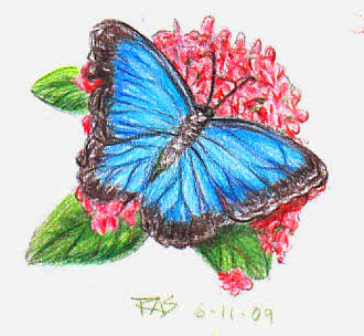 Blue Butterfly in colored pencil by Robert A. Sloan.