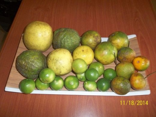 Five Citrus Fruits